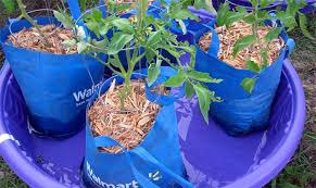 Grow veggies in plastic bag plant containers